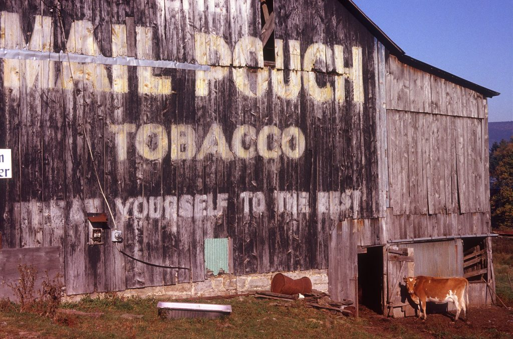 Mail Pouch barn, Aurora, West Virginia. Route 50. October 1982. Photo by Carl E. Feather